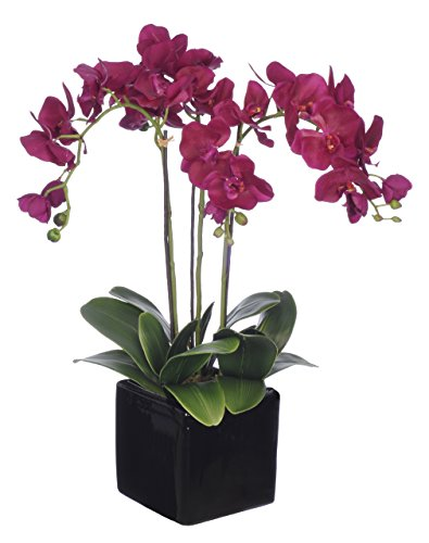 House-of-Silk-Flowers-Artificial-Triple-Stem-Phalaenopsis-Orchid-Arrangement