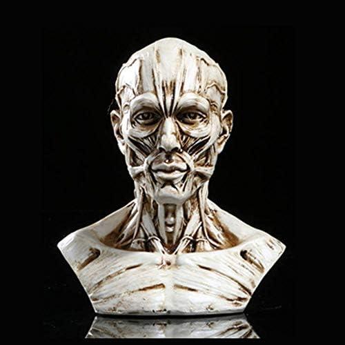 Hars schedel, buste voor anatomie van menselijke spieren, voor medische kunstenaar tekening studie huisdecoratie