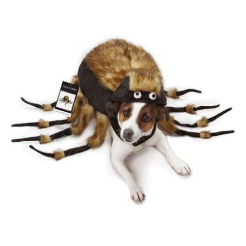 [Dog Halloween Costume Fuzzy Spider Tarantula Pet Costumes spiders XS - L (XS)] (Batman And Robin Tutu Costumes)