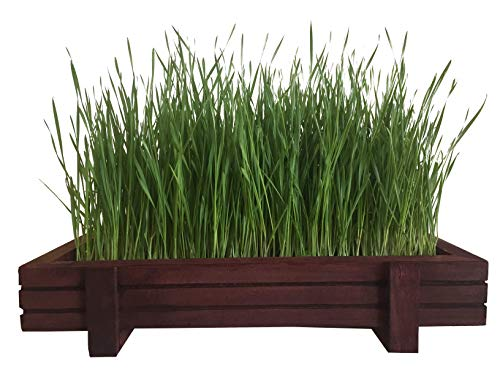 Certified Organic Wheatgrass Kit with Beautiful Wooden Countertop Planter, Wonder Soil, Organic Wheatgrass Seeds, Spray Bottle & Easy to Follow Instructions.