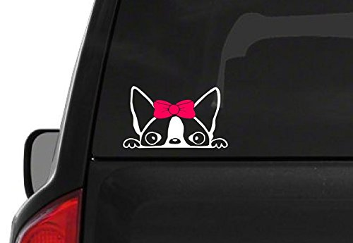 Terrier Auto Car - Peeking Boston Terrier Girl (A24) Pink Bow Vinyl Decal Sticker Car Laptop Window