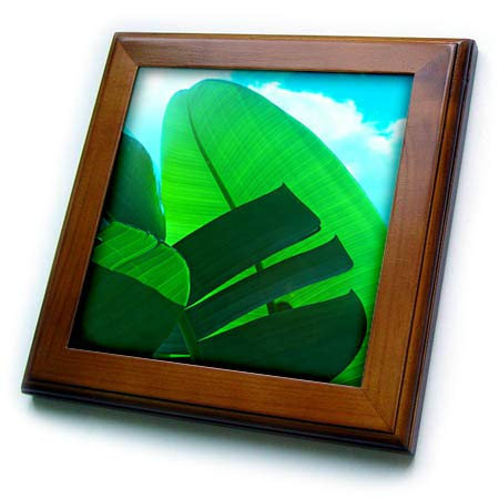 Tile Framed Sky - 3dRose Lens Art by Florene - Exotic Tropic Plants - Image of Large Banana Leaves Against Aqua Sky - 8x8 Framed Tile (ft_308239_1)