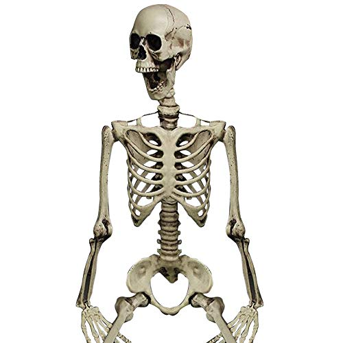 Halloween Party Decoration Poseable Full Size Human Skull Skeleton Anatomical ()