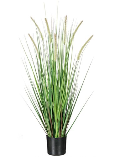 Sullivans Artificial Potted Dogtail Grass, 36 Inches High, Black Pot, Dark Green (0561POT) by Sullivans