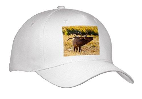 3dRose Danita Delimont - Elk - USA, Colorado, Rocky Mountain NP. Male elk Bugling in Grassland. - Caps - Adult Baseball Cap - Decal Bugling Elk