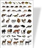 Wildlife Educational Poster - 58 European Wildlife images