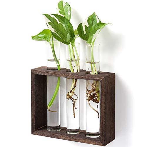 Mkono Wall Hanging Glass Planter Propagation Station Modern Flower Bud Vase in Vintage Wood Stand Rack with 3 Test Tube Tabletop Terrarium for Propagating Hydroponics Plants, Home Office Decoration