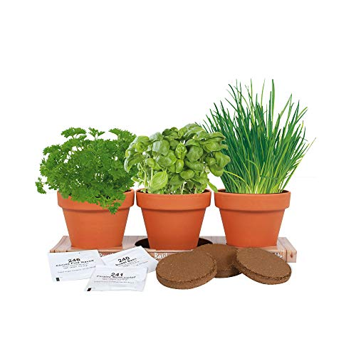 TotalGreen Holland Healthy Kitchen Herb Trio Grow Kit   Grow Basil, Parsley and Chives   Grow a Herb Garden from Seed in Unique Terra Cotta Pots   GMO Free Herbs   Exclusive Kitchen Herbs Grow Kit