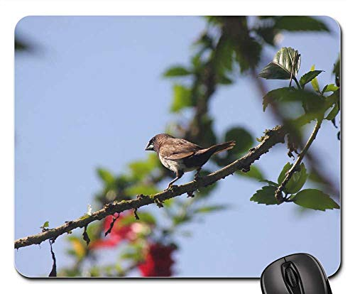 Etruscan Pattern - Mouse Pads - Branch Bird Nature