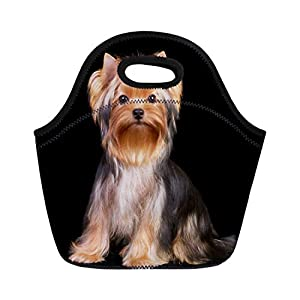 Semtomn Neoprene Lunch Tote Bag Brown Dog Yorkshire Terrier the Red Yorkie Adorable Adore Reusable Cooler Bags Insulated Thermal Picnic Handbag for Travel,School,Outdoors,Work 13