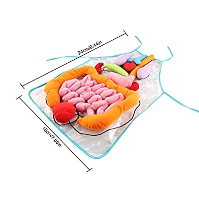 Per DIY 3D Plush Stuffed Viscera Internal Organs Model Transparent Apron Kindergarten Kids Children Physiological Education Toy : Baby