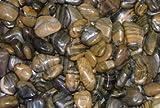 Polished Pebble, Tiger Striped, ¾-1½''