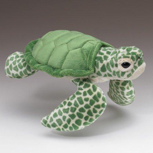 Green Sea Turtle 12