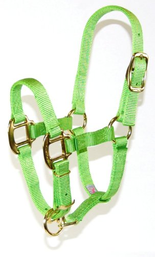 (Hamilton 3/4 Adjustable Quality Horse Halter, 200 to 300-Pound Weanling, Lime)