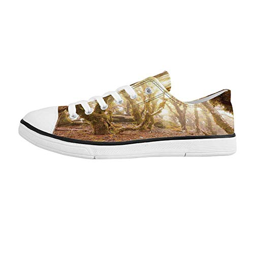 Rainforest Decorations Comfortable Low Top Canvas Shoes,Morning Sun Rays Mist in Virgin Mountain Forest Moss on Trees Natural Paradise for Men Boys,US 9