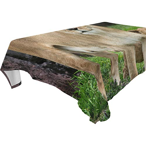 Jojogood Virginia Zoo's Lion Cub Home Decoration Polyester Tablecloth 60x60(in), Modern Desk Sofa Table Cloth Cover for Wedding Party Decor