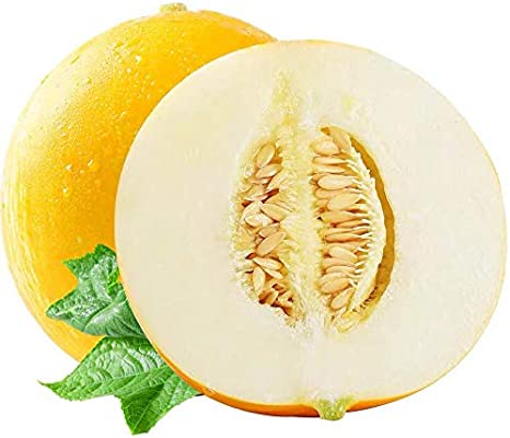 20Pcs Cantaloupe Seeds Organic Non GMO Cantaloupe Melon Seeds Bonsai Fruit Seeds for Home Garden Planting Kaimus Seeds