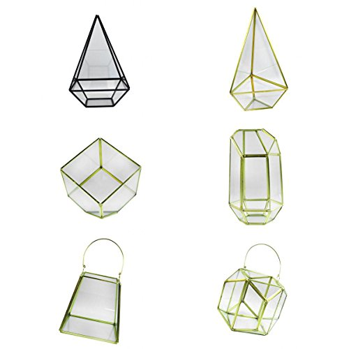 Jili Online 6Pieces Modern Hanging Glass Terrarium Container Succulent Plant Holder Case by Jili Online