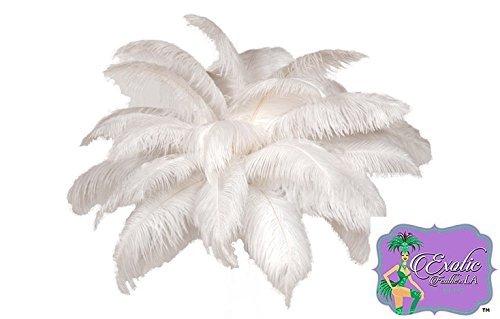 Special Sale Ostrich Feathers Wholesale Bulk 17-20