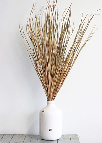 Preserved Wild Grass in Natural Color20 Pieces Per Bunch45-55