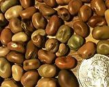 buy David's Garden Seeds Bean Fava Sweet Lorane SL0006 (Brown) 50 Organic Seeds now, new 2018-2017 bestseller, review and Photo, best price $9.49