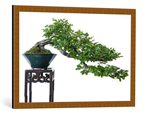 kunst für alle Framed Art Print: Bernd Schmidt Beech as Bonsai Tree - Decorative Fine Art Poster, Picture with Frame, 33.5x21.7 inch / 85x55 cm, Copper Brushed