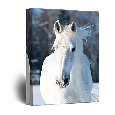Quiet White Horse Harmony - Canvas Art