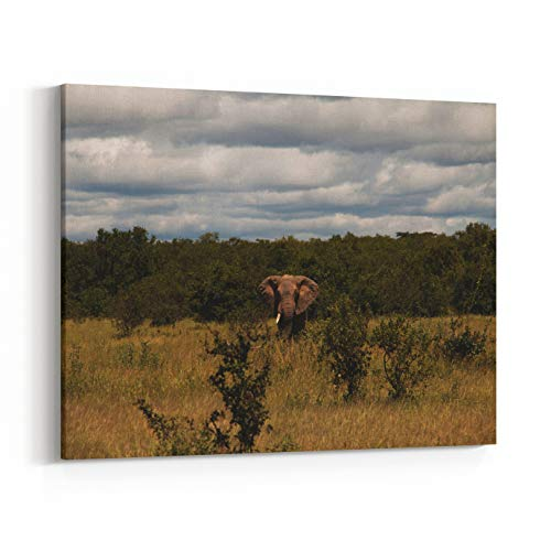 (Rosenberry Rooms Canvas Wall Art Prints - an African Elephant in Ruaha National Park Flashing Ears to Warn Intruders Not to Get Near (24 x 20 inches) )