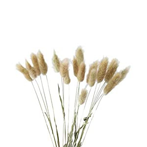 Vosarea 20pcs Natural Dried Flowers Colorful Lagurus Ovatus Real Flower Bouquet for Home Wedding Decoration Rabbit Tail Grass Bunch (Primary Color) 25