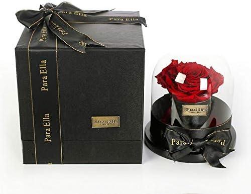 Amazon Com Para Ella Rose In Glass Dome Preserve Rose Live 3