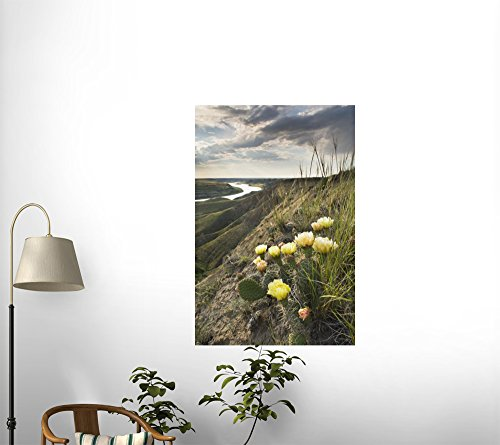Prickly-pear Cactus along the South Saskatchewan River near Leader Peel and Stick Fabric Wall Sticker by Wallmonkeys Wall Decals