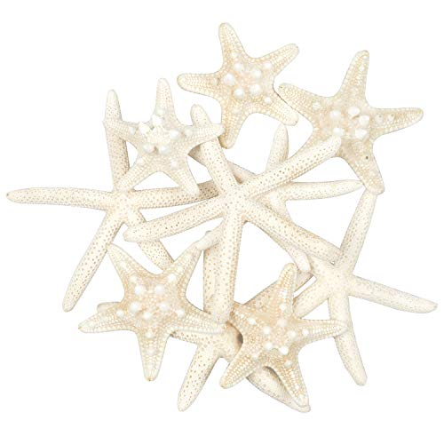 (Jangostor 10 PCS Starfish Mixed Ocean Beach Starfish-Natural Colorful Seashells Starfish Perfect for Wedding Decor Beach Theme Party, Home Decorations,DIY Crafts, Fish Tank)