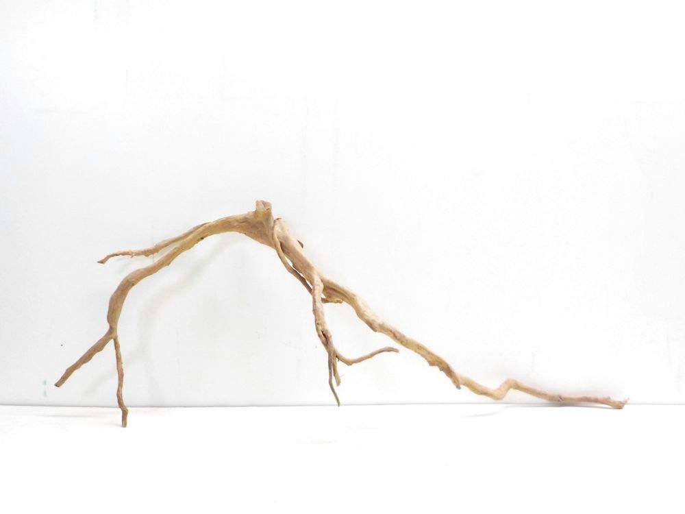 AQUARISTIKWELT24 No.7303 Aquarium Root Dimensions 112 x 25 x 42 XXXL Wood Decoration