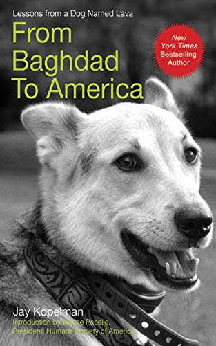 From Baghdad to America: Life Lessons from a Dog Named Lava by [Kopelman, Jay]