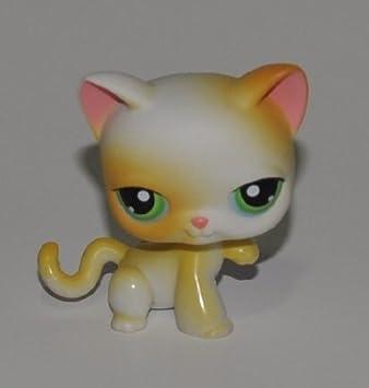 Amazon.com: Gato # 73 (blanco, ojos verdes, Naranja puntos ...