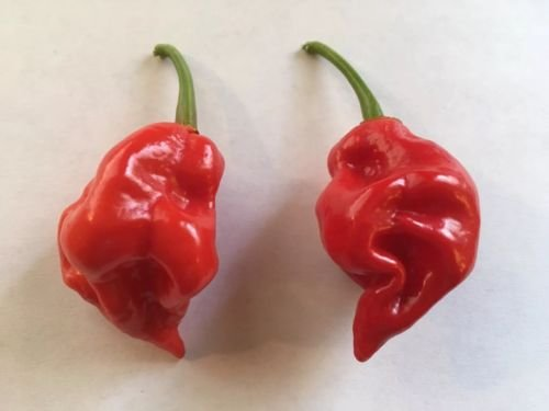 20 NAGA Viper Pepper Seed - Extreme Heat - 2017 5TH for sale  Delivered anywhere in USA