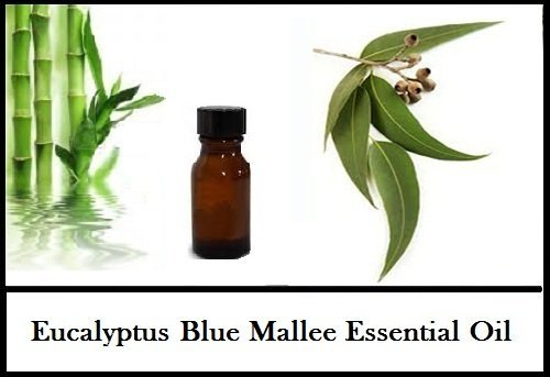 eucalyptus-blue-mallee-essential-oil-100-pure-natural-30ml