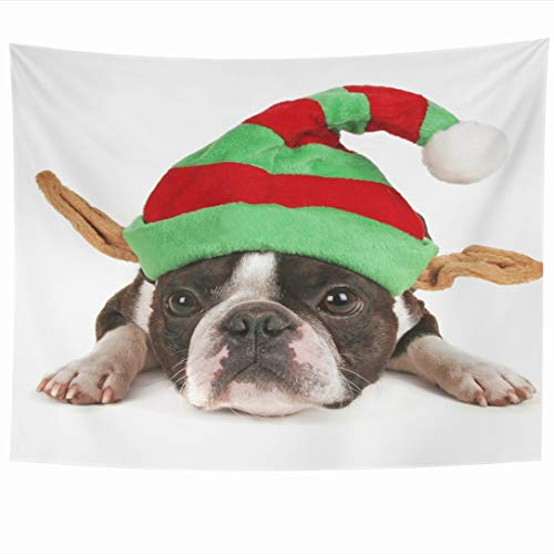 Ahawoso Tapestry 60x50 Inch Friend White Boston Terrier Christmas Hat On Elf Holidays Costume Dog Baby Best Big Looking Tapestries Wall Hanging Home Decor for Living Room Bedroom Dorm