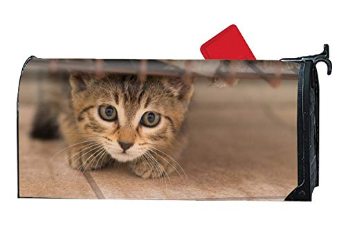 BABBY Seasonal Mailbox Covers Animal Cats Kitten Cute Mail Box Cover for Spring,Summer,Fall/Autumn and Winter by BABBY