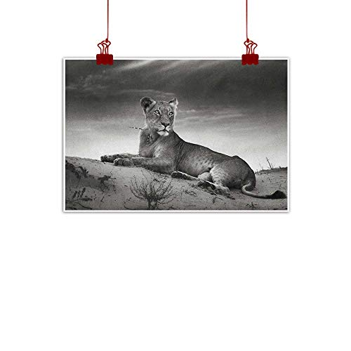 """Sunset glow Wall Art Painting Print Black and White,Wild Lioness on Desert Sand Dunes African Animal Safari Image Print, Black White Grey 20""""x16"""" Home Decorations Modern Stretched and Artwork"""
