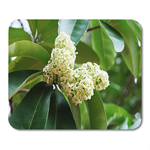 Perfumed Sugar - Semtomn Mouse Pad Green Aroma Alstonia Scholaris Flowers Indian Devil Tree Bark Mousepad 9.8