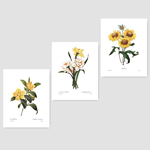 (Set of 3) Botanical Art (Yellow Flower Prints, Redoute French Home Wall Decor) Daffodil, Sunflower - 8x10 Unframed