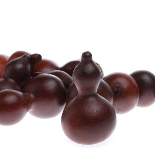 Factory Direct Craft 12 Piece Package Rustic Burgundy Dried Gourds