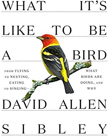 Hardcover What Its Like to Be a Bird David Allen Sibley - -