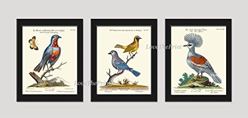 Bird Print Set of 3 Prints Antique Beautiful Blue Red Yellow Birds Butterfly Tree Branch Green Leaves Home Room Decor Wall Art Unframed Catesby