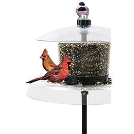 Droll Yankees Squirrel Proof Bird Feeder, Pole Cardinal Bird Feeders, Jagunda, 7.5 Feet, Auger Anchor, Clear, JGA