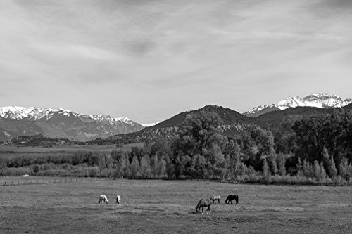 - 24 x 36 B&W Giclee Print Horses Graze in a Beautiful Valley in The Foothills The San Juan Range The Rocky Mountains just Outside The Town Ridgway, which Calls Itself The 2015 Highsmith 90a