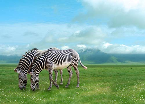 Two Zebras on Green Meadow Scenery Photo Backdrop Wild Nature Landscape Scenic Photography Studio Background 7x5 - 2 Canvas Meadow