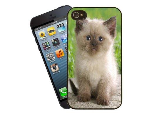 - 17–Coque chat mignon chaton persan Gatto Colourpoint siamois pour Apple iPhone 4/4s-Housse Par Eclipse idées cadeaux