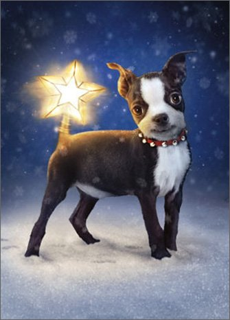 Dog With Star Topper Tail - Box of 10 Avanti Funny Boston Terrier Christmas Cards
